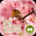 Bird & Cherry Blossoms Theme