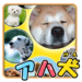 Brain Training-Aha dog picture