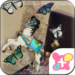 Butterflies Theme-Antique Box-