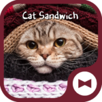 Cat  Wallpaper Cat Sandwich
