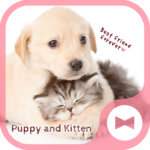 Cute Animal Wallpaper Puppy and Kitten Theme
