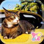Cute Theme-Cat on a Car-