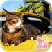 Cute Theme-Cat on a Car-