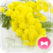 Cute Theme-Mimosa Flowers-