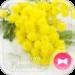Cute Theme-Mimosa Flowers-