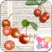 Cute Theme-Print Cherry-