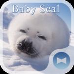 Cute Wallpaper Baby Seal Theme