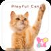 Cute wallpaper-Playful Cat-