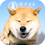 Dog Wallpaper Shiba Inu Maru