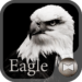 Eagle Wallpaper&icon