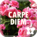 Flower Theme-Carpe Diem-