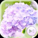 Flower Wallpaper Hydrangea