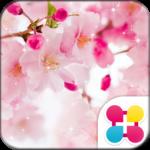 Flower Wallpaper Vivid Sakura