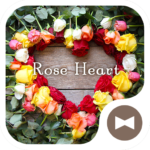 Flower Wallpaper Rose Heart