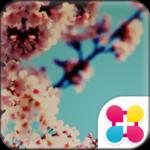 桜壁紙 サクラノスタルジー