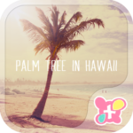 Palm Tree in Hawaii  Theme