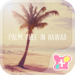 Palm Tree in Hawaii  Theme