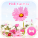 Pink Cosmos  Flower Theme