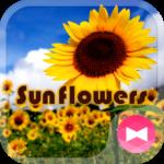 Summer Wallpaper Sunflowers