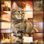 Swapping Cat Puzzle