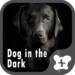 Wallpaper-Dog in the Dark-