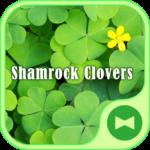 Wallpaper Shamrock Clovers