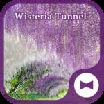 Wallpaper Wisteria Tunnel