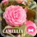 flower Theme Camellia