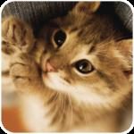 Cat Memory Cleaner