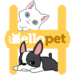 Hellopet – Cute cats, dogs and other unique pets