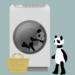 Panda washing Live Wallpaper