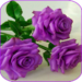 Beautiful flowers and roses pictures Gif