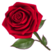 Flowers And Roses Animated Images Gif 4K