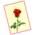 Greeting Cards Gallery & Maker – For all occasions
