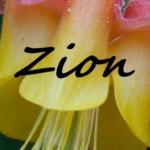 Zion Wildflowers